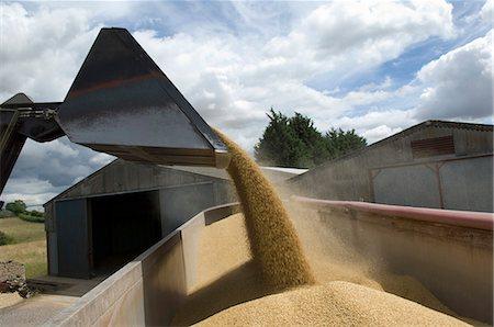 Loading grain into lorry Stock Photo - Premium Royalty-Free, Code: 649-03622026