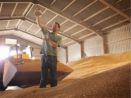 Farmer inspecting grain Stock Photo - Premium Royalty-Free, Code: 649-03622445