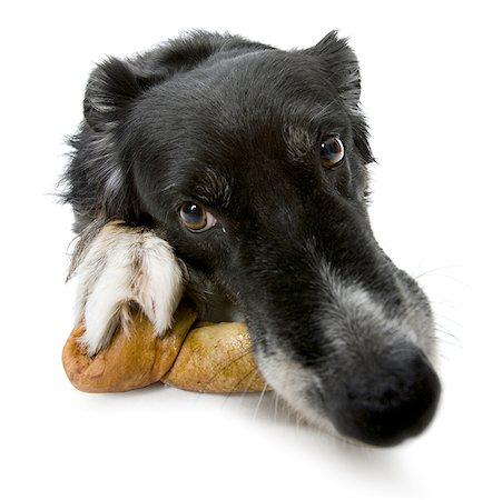 Close-up of a dog lying with a dog bone Stock Photo - Premium Royalty-Free, Code: 640-01356139