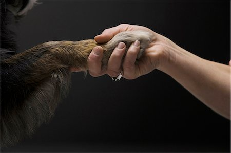 Woman shaking a paw with dog Stock Photo - Premium Royalty-Free, Code: 640-03262464