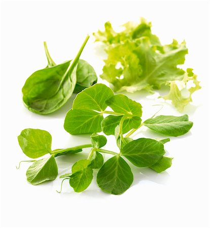 Pea shoots and lettuce leaves Stock Photo - Premium Royalty-Free, Code: 659-06154309