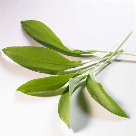 Several wild garlic leaves Stock Photo - Premium Royalty-Free, Code: 659-06154317