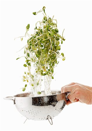 sprout - Sunflower sprouts being washed Stock Photo - Premium Royalty-Free, Code: 659-06154363