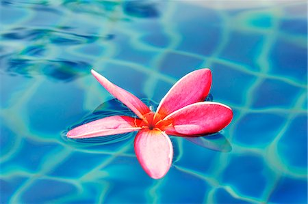 decorative - Frangipani flower in water Stock Photo - Premium Royalty-Free, Code: 659-06155520