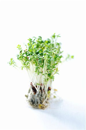 sprout - Fresh cress Stock Photo - Premium Royalty-Free, Code: 659-06151672