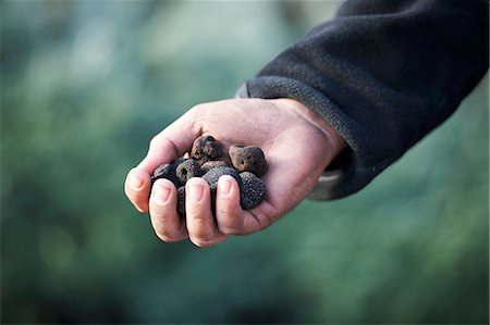 fungus - A hand holding black truffles Stock Photo - Premium Royalty-Free, Code: 659-06152015