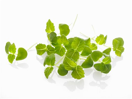 sprout - Shiso sprouts Stock Photo - Premium Royalty-Free, Code: 659-06152098