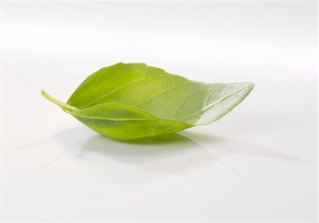 A basil leaf Stock Photo - Premium Royalty-Free, Code: 659-06152556
