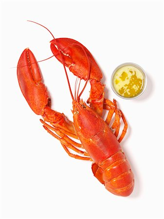 Whole Steamed Lobster with Melted Butter; From Above; White Background Stock Photo - Premium Royalty-Free, Code: 659-06152734