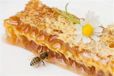 A honeycomb, a bee and a daisy Stock Photo - Premium Royalty-Free, Code: 659-06152884