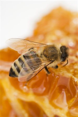A bee on a honeycomb (close-up) Stock Photo - Premium Royalty-Free, Code: 659-06152883