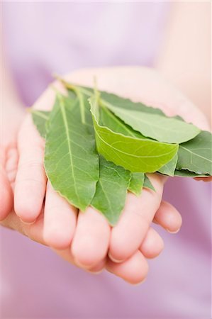 Hands holding bay leaves Stock Photo - Premium Royalty-Free, Code: 659-06152893
