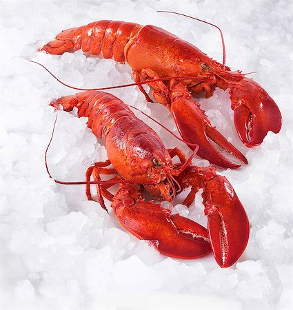 Two cooked lobsters on ice Stock Photo - Premium Royalty-Free, Code: 659-06153418