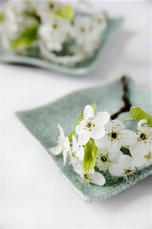 A Sprig of White Spring Flowers on a Green Plate Stock Photo - Premium Royalty-Free, Code: 659-06184016