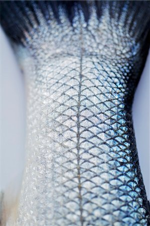 A fishtail (close-up) Stock Photo - Premium Royalty-Free, Code: 659-06185725