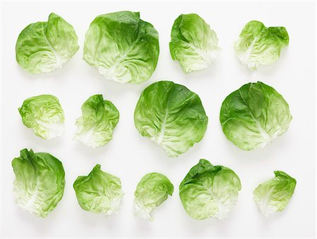 Lettuce leaves Stock Photo - Premium Royalty-Free, Code: 659-06186932