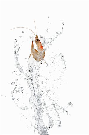 fly - Prawn and water Stock Photo - Premium Royalty-Free, Code: 659-06187858