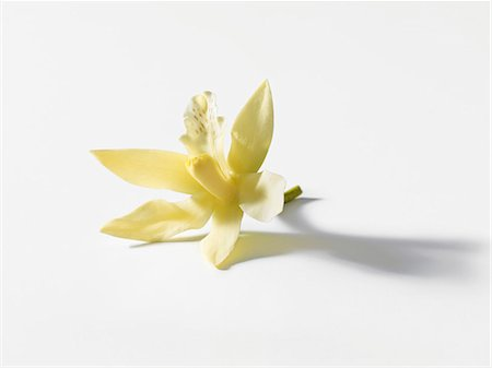 Vanilla blossom Stock Photo - Premium Royalty-Free, Code: 659-06187871