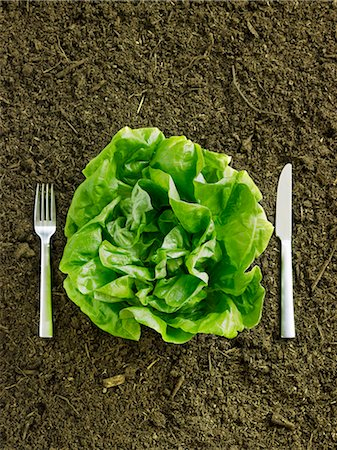 dirt - Fresh Head of Butter Lettuce in Dirt with Fork and Knife Stock Photo - Premium Royalty-Free, Code: 659-06188206