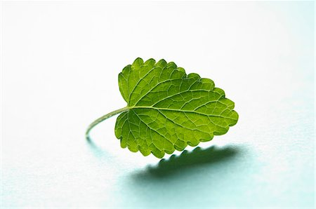 A lemon balm leaf Stock Photo - Premium Royalty-Free, Code: 659-06306580