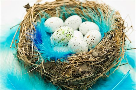 spring - Chocolate Easter eggs and blue feathers in an Easter nest Stock Photo - Premium Royalty-Free, Code: 659-06372485