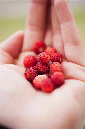 Wild strawberries on the palm of someone's hand Stock Photo - Premium Royalty-Free, Code: 659-06372638
