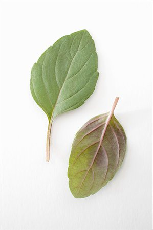 Two basil leaves Stock Photo - Premium Royalty-Free, Code: 659-06372821
