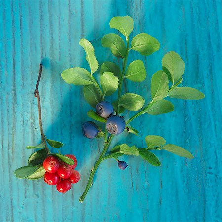 A sprig of fresh wild berries Stock Photo - Premium Royalty-Free, Code: 659-06494103