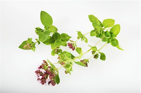 Oregano on a white surface Stock Photo - Premium Royalty-Free, Code: 659-06494175