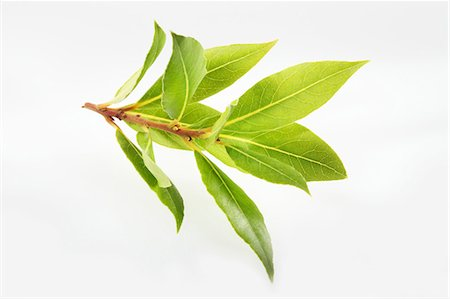 Bay leaves Stock Photo - Premium Royalty-Free, Code: 659-06494298