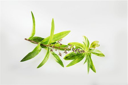 Lemon verbena Stock Photo - Premium Royalty-Free, Code: 659-06494308