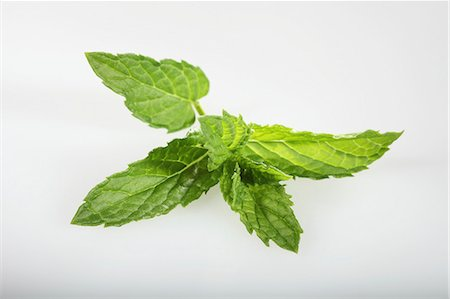 Moroccan mint (Mentha spicata) Stock Photo - Premium Royalty-Free, Code: 659-06494386