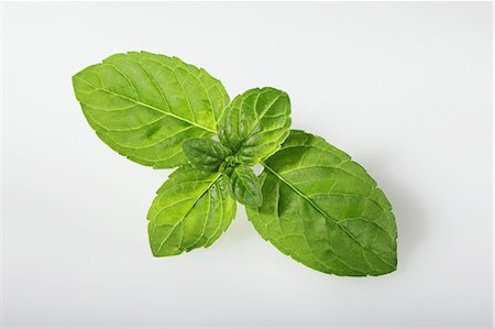 Mentuccia mint (Mentha species Mentuccia) Stock Photo - Premium Royalty-Free, Code: 659-06494388