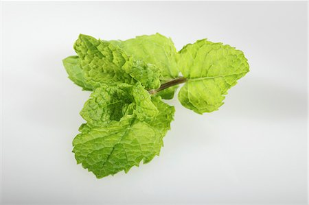 Mojito mint (Hemingway mint, Mentha species Nemorosa) Stock Photo - Premium Royalty-Free, Code: 659-06494389