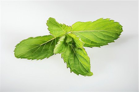 Swiss mint (Mentha spicata Swiss) Stock Photo - Premium Royalty-Free, Code: 659-06494393