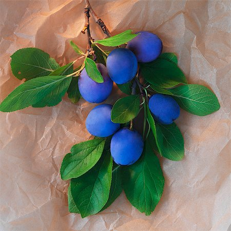 single fruits tree - A sprig of plums Stock Photo - Premium Royalty-Free, Code: 659-06495766