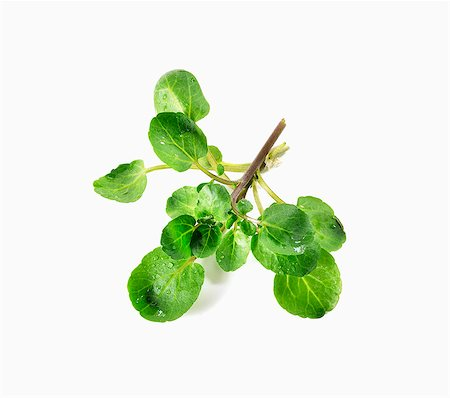 Fresh Bunch of Upland Cress on White Background Stock Photo - Premium Royalty-Free, Code: 659-06493758