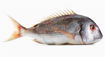 A pink gilt-head bream against a white background Stock Photo - Premium Royalty-Free, Code: 659-06671621