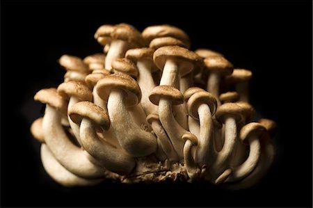 fungus - Brown Mushrooms on a Black Background Stock Photo - Premium Royalty-Free, Code: 659-06901589