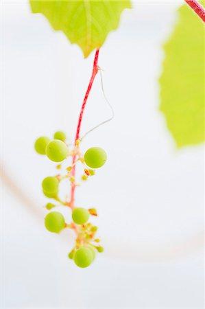 Green grapes in harsh, white light Stock Photo - Premium Royalty-Free, Code: 659-06902257