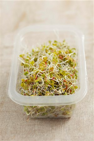sprout - Radish sprouts Stock Photo - Premium Royalty-Free, Code: 659-06902447