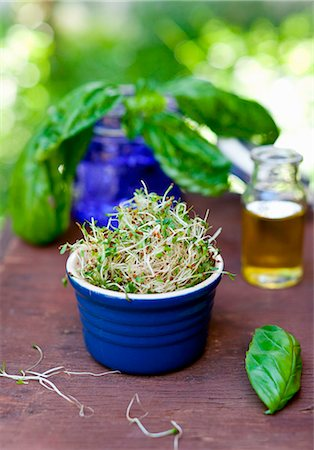 sprout - Ramekin Full of Sprouts; Fresh Basil Stock Photo - Premium Royalty-Free, Code: 659-07027085
