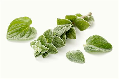 A sprig of fresh oregano and individual leaves Stock Photo - Premium Royalty-Free, Code: 659-07027154
