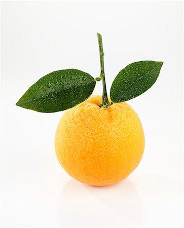 single fruits tree - Orange with leaves Stock Photo - Premium Royalty-Free, Code: 659-07027859