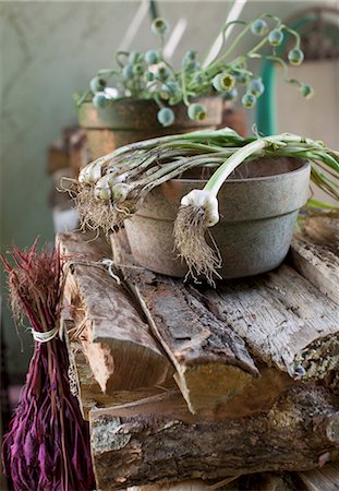 rustic - Green Onions Over a Clay Bowl on a Woodpile Stock Photo - Premium Royalty-Free, Code: 659-07028442