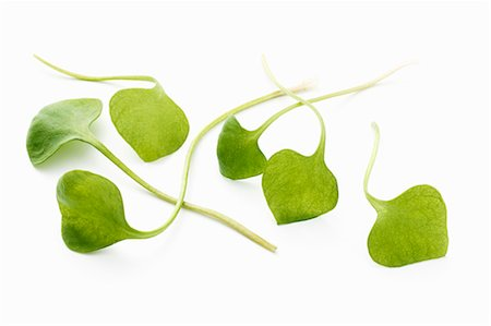 Several purslane leaves Stock Photo - Premium Royalty-Free, Code: 659-07028837