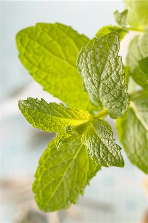 A sprig of fresh lemon balm Stock Photo - Premium Royalty-Free, Code: 659-07068665