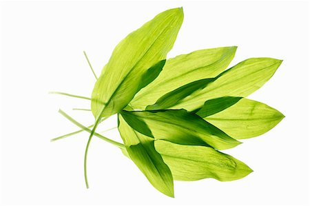 Several wild garlic leaves Stock Photo - Premium Royalty-Free, Code: 659-07069303