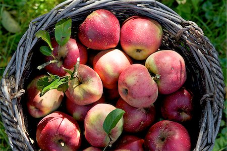 fresh - Red apples in a basket in a field Stock Photo - Premium Royalty-Free, Code: 659-07069466