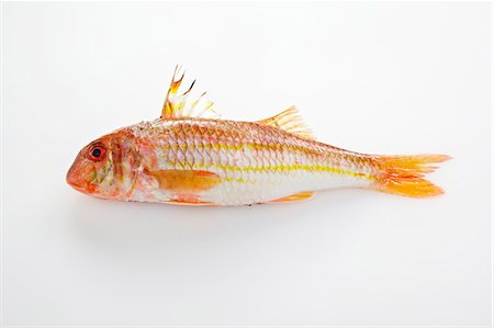 Red mullet on a white surface Stock Photo - Premium Royalty-Free, Code: 659-07069553